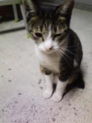 オトナモード 公式ブログ/猫19。 画像1