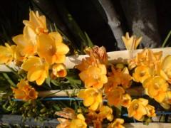オトナモード 公式ブログ/花の元気 画像1