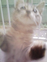 オトナモード 公式ブログ/猫3 画像1