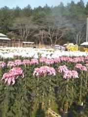 假屋崎省吾 公式ブログ/笠間の菊2 画像1