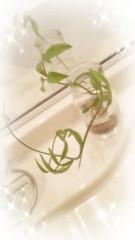 桜井聖良 公式ブログ/12.14 きらきらパール 画像2