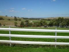 桜井聖良 公式ブログ/3.22 競走馬と乗馬馬の違い 画像1