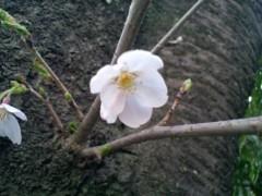 桜井聖良 公式ブログ/4.7 的中したよー♪ 画像1