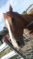 桜井聖良 公式ブログ/3.15 馬の本質2−感情はない− 画像1