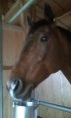 桜井聖良 公式ブログ/3.10 馬の気持ちを知る方法 その1 画像1