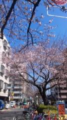 清水和博 公式ブログ/桜も 画像1
