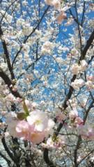 エリザ 公式ブログ/春ですね〜♪ 画像1