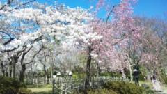 エリザ 公式ブログ/春ですね〜♪ 画像3