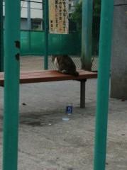 小原正大 公式ブログ/黄昏猫 画像1