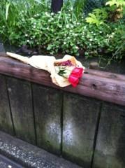 小原正大 公式ブログ/謎の花束 画像1