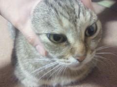 小谷中瞳 公式ブログ/(´・_・)☆彡 画像1