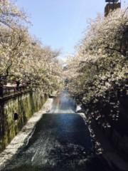 Raychell 公式ブログ/桜チルチル 画像1