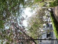 大橋央旺(タンバリン) 公式ブログ/もうゴールデンなウィーク 画像1