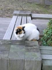 大橋央旺(タンバリン) 公式ブログ/野良猫 画像1