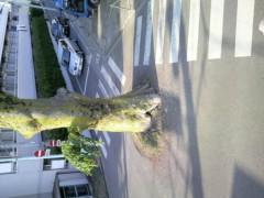大橋央旺(タンバリン) 公式ブログ/この木なんの木? 画像1