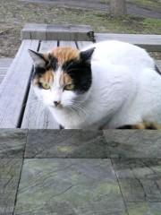 大橋央旺(タンバリン) 公式ブログ/野良猫 画像2