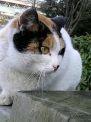 大橋央旺(タンバリン) 公式ブログ/野良猫 画像3