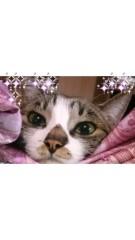 かとうれい子 公式ブログ/まるちゃんの可愛さ 画像1