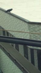 かとうれい子 公式ブログ/新幹線から外を見ると… 画像1