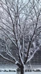 かとうれい子 公式ブログ/3月1日暖かい1日でしたね 画像2