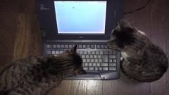 かとうれい子 公式ブログ/猫ニュース 画像1