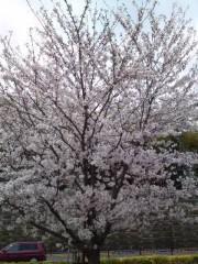 かとうれい子 公式ブログ/お花見 画像1