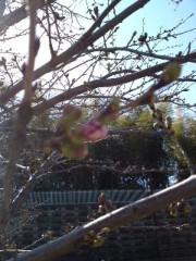 かとうれい子 公式ブログ/春、春、春。 画像1
