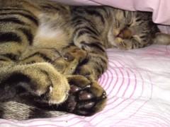かとうれい子 公式ブログ/おやすみなさい 画像1