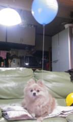 稲村真奈美 公式ブログ/うちの看板犬 画像1