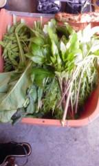 稲村真奈美 公式ブログ/お野菜 画像1