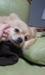 稲村真奈美 公式ブログ/おねむちゃ… 画像1