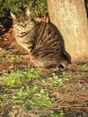 ながせみほ 公式ブログ/ネコの気持ち 画像1