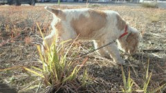 ながせみほ 公式ブログ/犬種:アメリカンコッカースパニエル 画像3