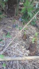 ながせみほ 公式ブログ/竹の子にも雄と雌があるんだよ 画像1
