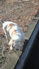 ながせみほ 公式ブログ/犬種:アメリカンコッカースパニエル 画像1