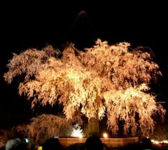 ShunKan 公式ブログ/夜桜 画像1
