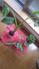 安川窓華 公式ブログ/観葉植物を埋め変え?引っ越し? 画像1