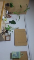 安川窓華 公式ブログ/観葉植物を埋め変え?引っ越し? 画像2
