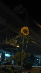 キミーブラウニー 公式ブログ/向日葵のようにー(o^∀^o) 画像1