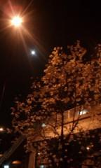 キミーブラウニー 公式ブログ/夜の桜 画像1