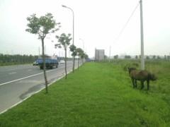 城野マサト(木野雅仁) 公式ブログ/お馬さん 画像1