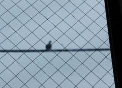 川島けん 公式ブログ/[とり撮り]鳩。 画像1