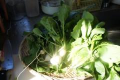 川島けん 公式ブログ/採れたて野菜 画像1