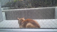 Act 公式ブログ/猫太郎 画像1