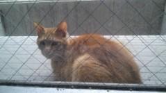 Act 公式ブログ/猫太郎 画像2