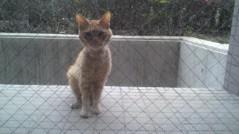 Act 公式ブログ/猫太郎 画像3