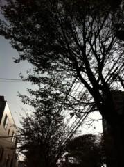 中山優貴 公式ブログ/落ち葉 画像2