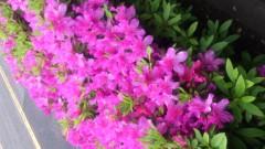 華舞斗 あずみ 公式ブログ/2012-05-06 16:07:06 画像1