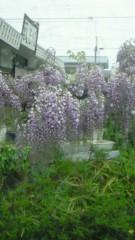 華舞斗 あずみ 公式ブログ/2011-04-23 18:30:09 画像2