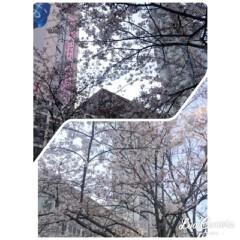 華舞斗 あずみ 公式ブログ/さくら 画像1